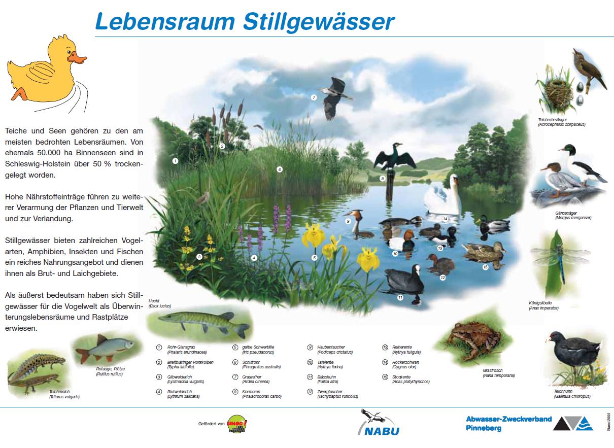 Wassertiere natur f r alle im kreis pinnegerg for Wassertiere im teich